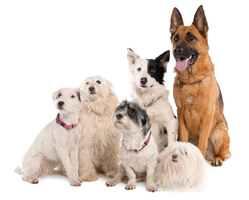 Chesterfield Dog Rescue Centre