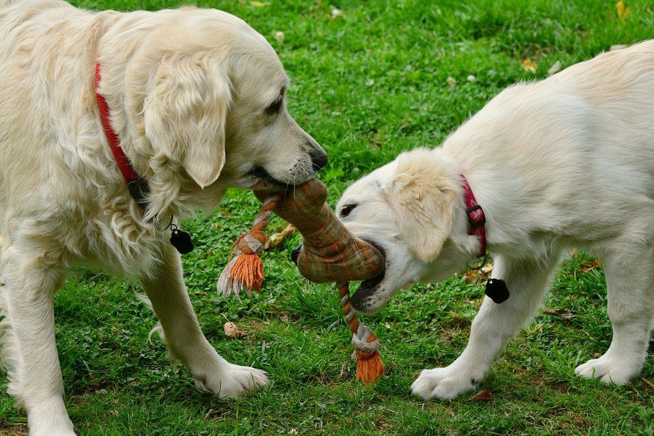 Chesterfield Animal Rescue Rehabilitate