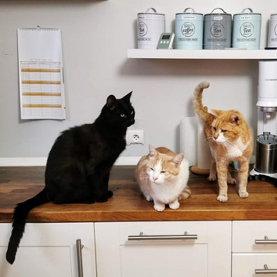 Chesterfield Animal Rescue Cats