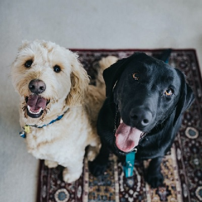 Chesterfield Animal Rescue Dogs